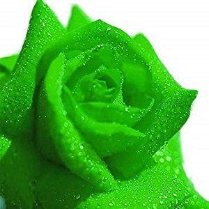 グリーン バラ