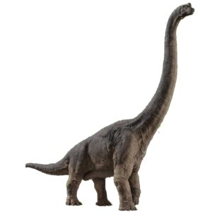 ブラキオサウルス4